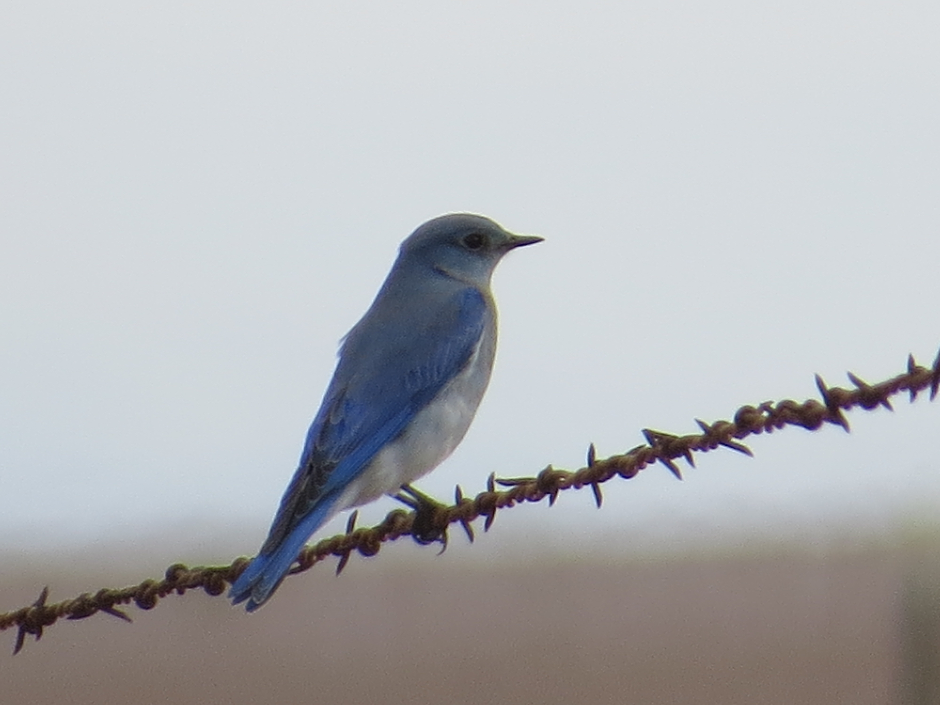 Bird Pictures From Northwest Kansas Rawlins County